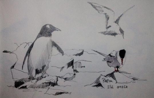 Dessin cahier Didier Antarctique-7